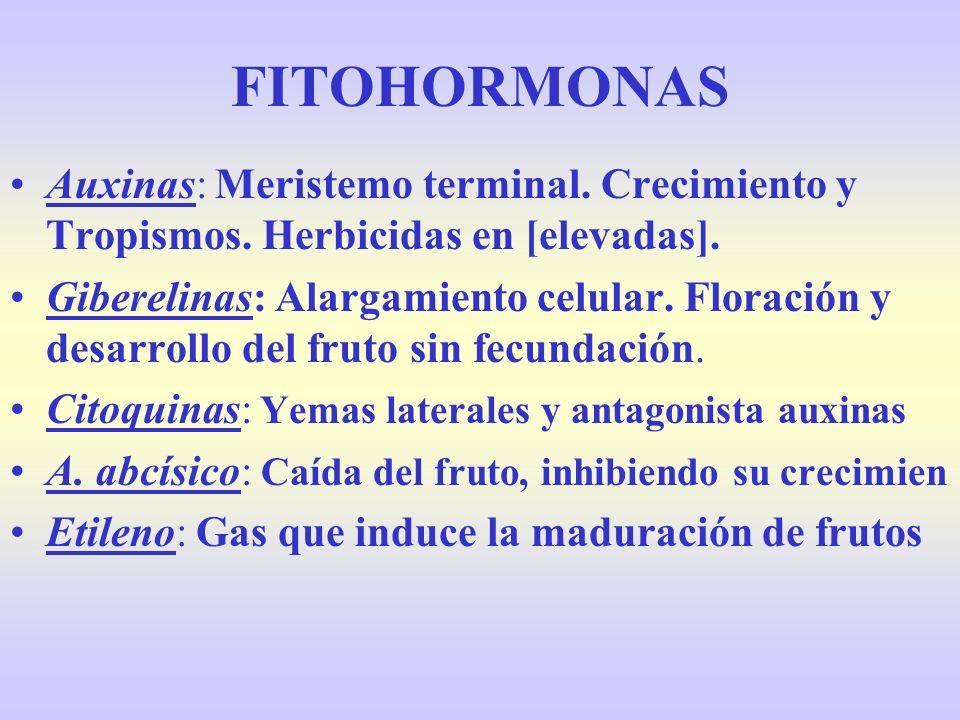 FITOHORMONAS Auxinas: Meristemo terminal. Crecimiento y Tropismos. Herbicidas en [elevadas].